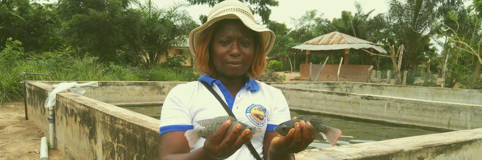 Nous produisons les  meilleurs poissons Tilapias de la région